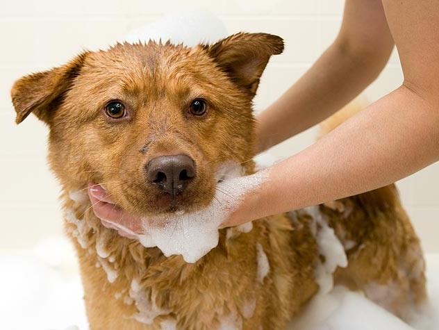 Tips Memandikan Anjing Yang Baik Dan Benar