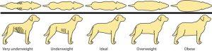 Panduan Berat Ideal Pada Anjing