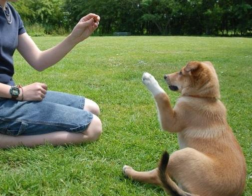 Tutorial Terbaru Melatih Anjing Sampai Jinak