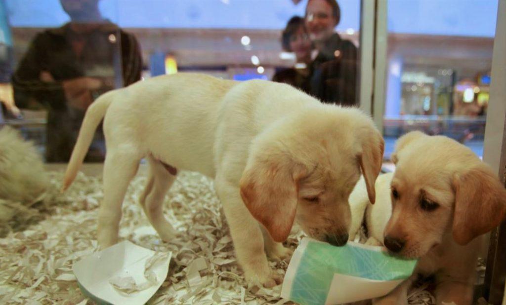 Langkah Bermain Dengan Anjing Di Luar Lingkungan Rumah