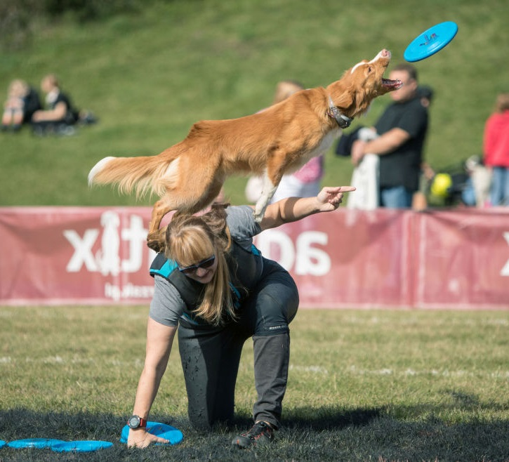 Tutorial Terbaru Untuk Melatih Anjing Agar Menurut