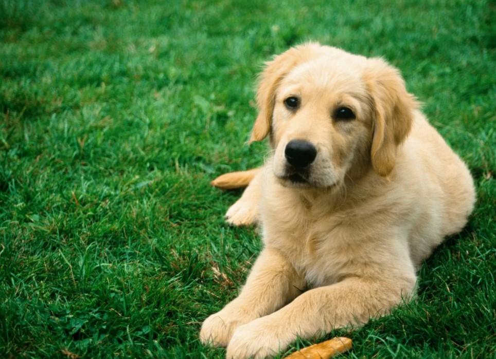 Cara Terbaik Untuk Mengawinkan Anjing Dengan Benar