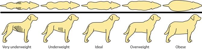 Pengetahuan Cara Memberi Makan Anjing Yang Benar