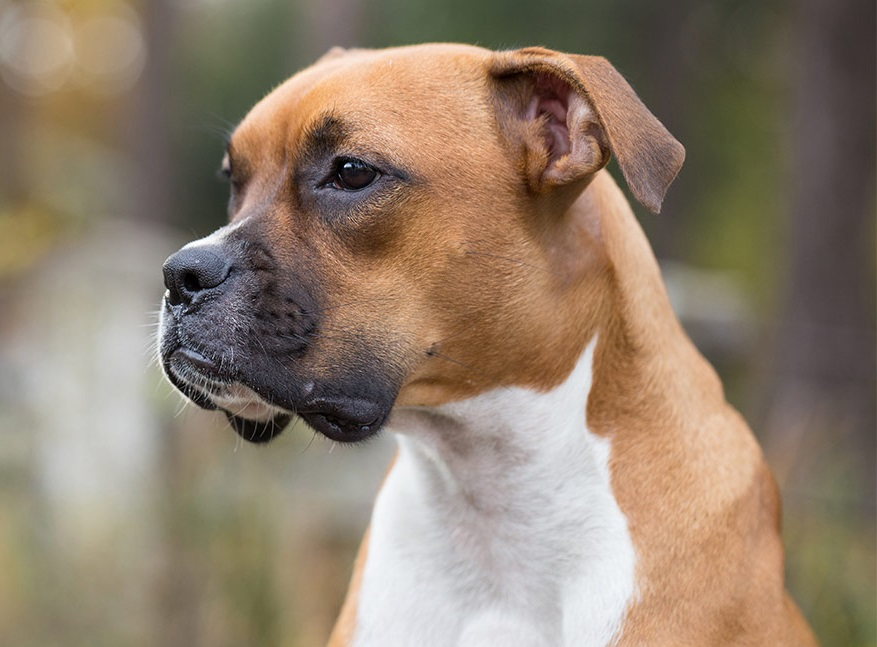 Ras Anjing Yang Mudah Di Pelihara Untuk Pemula